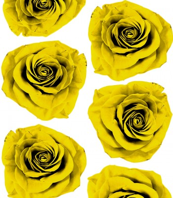 ROSEBLOSSOM_YELLOW