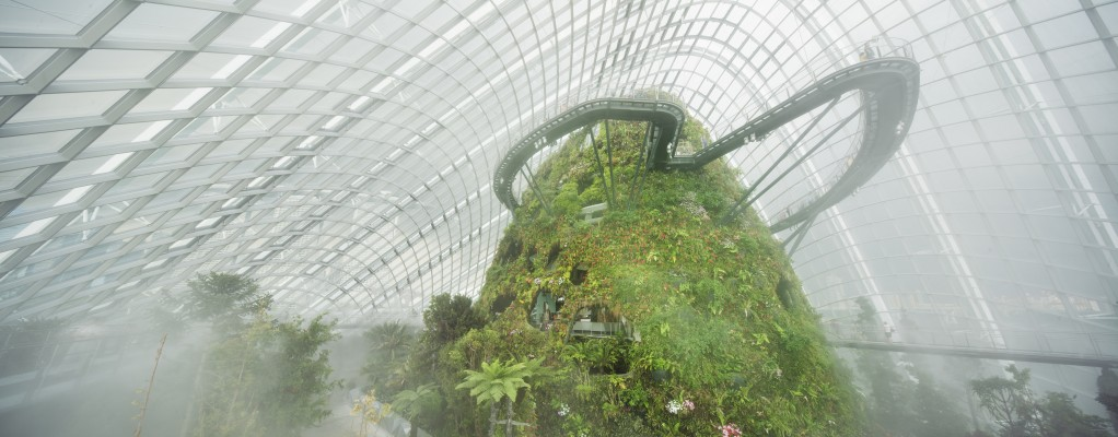 Cloud Forest 1